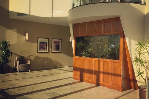 500 gallon - Commercial Lobby Cichlid Tank