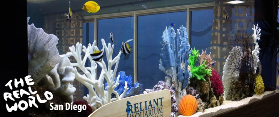 reliant-aquarium-real-world-2